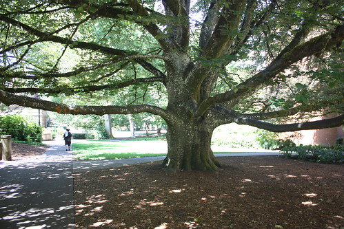 The Knight Library tree
