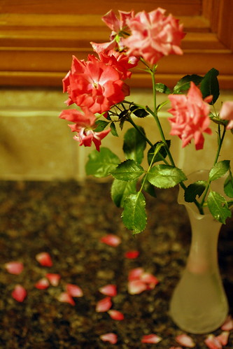 [122/365] Fresh Roses