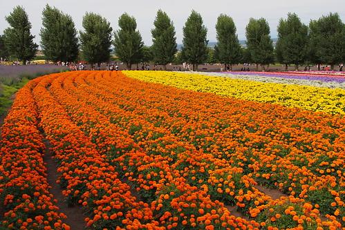 furano floristic jp130805