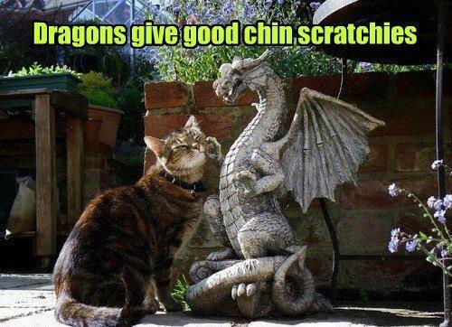 Dragon Chin Scratchies