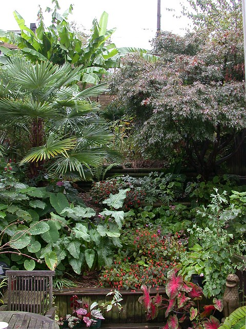 Garden, October 2013