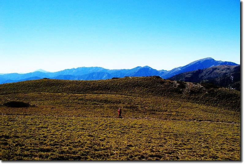 三叉山矮箭竹林(背景為南一段群峰) 1