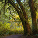 Mossy Trees... by Jeff J.......