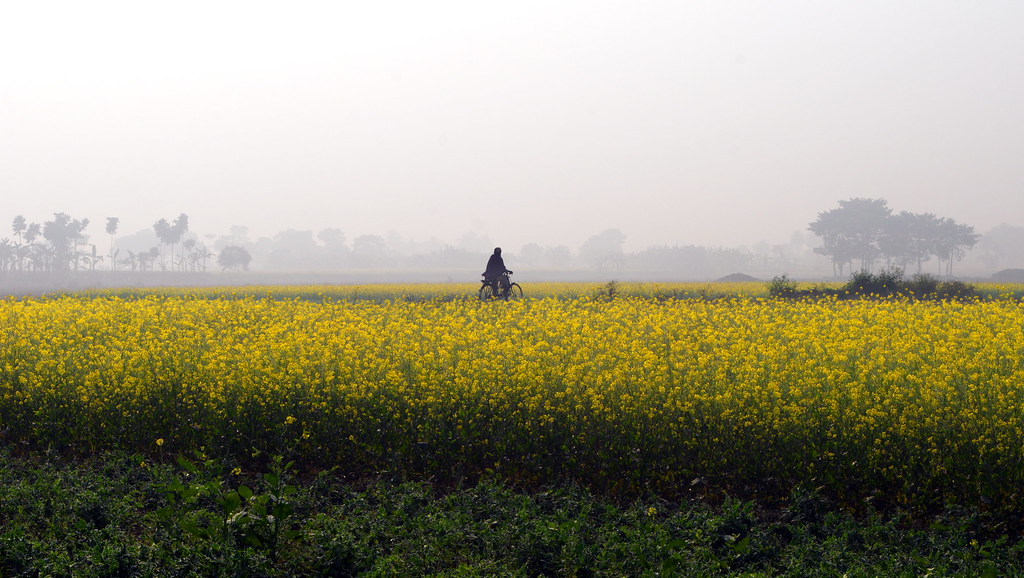 The Mustard field and cycling...