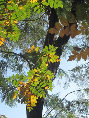 Árbol con hojas by JoseAngelGarciaLanda