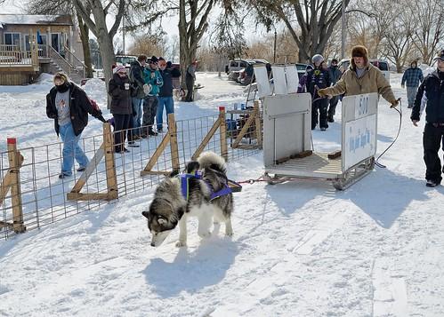 Dog Pulls 108-D7K_2563
