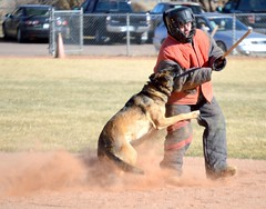 animal sports(1.0), animal(1.0), dog(1.0), sports(1.0), pet(1.0), mammal(1.0), police dog(1.0), athlete(1.0),