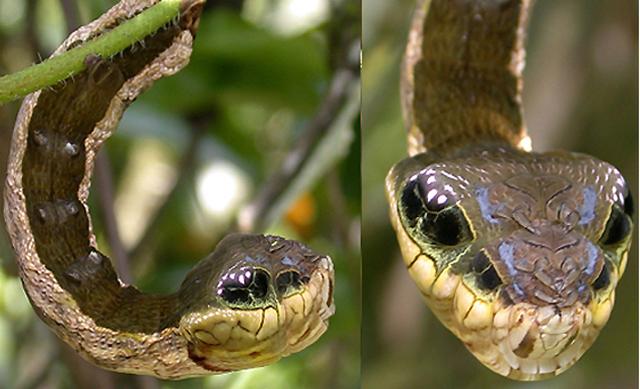 Fogonazos: El gusano que quería ser serpiente