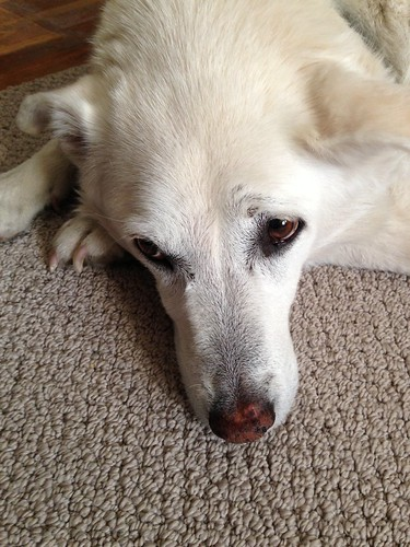 156_2013_family by teach.eagle
