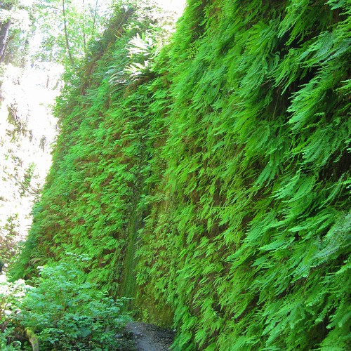 Fern Canyon 17