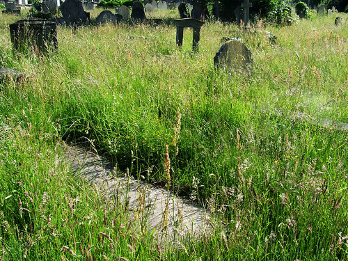 cemetery meadow 4