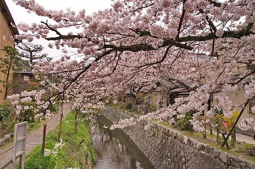 【写真】2013 桜 : 哲学の道/2018-12-24/IMGP9214