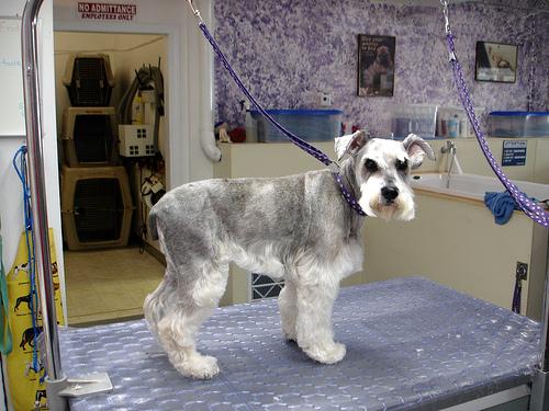 Best Dog Boarding Ithaca Ny