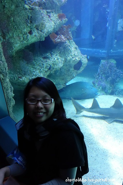 napoleon wrasse/humphead wrasse with cindy