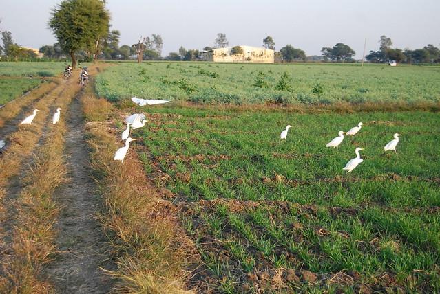 Biodiversity Conservation and Bhagirath Krishak Abhiyan