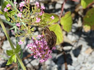 028 vlinder