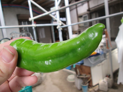 A single pepper