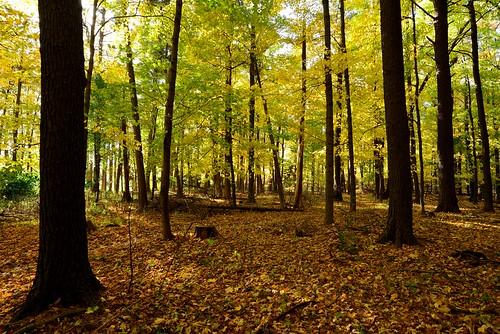 color fall leaves nikon path biketrail d600 frest devilducmike
