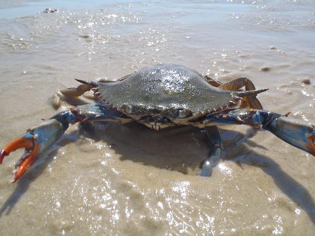 Family fishing and crabbing fun at kiptopeke state park for Va saltwater fishing regulations 2017
