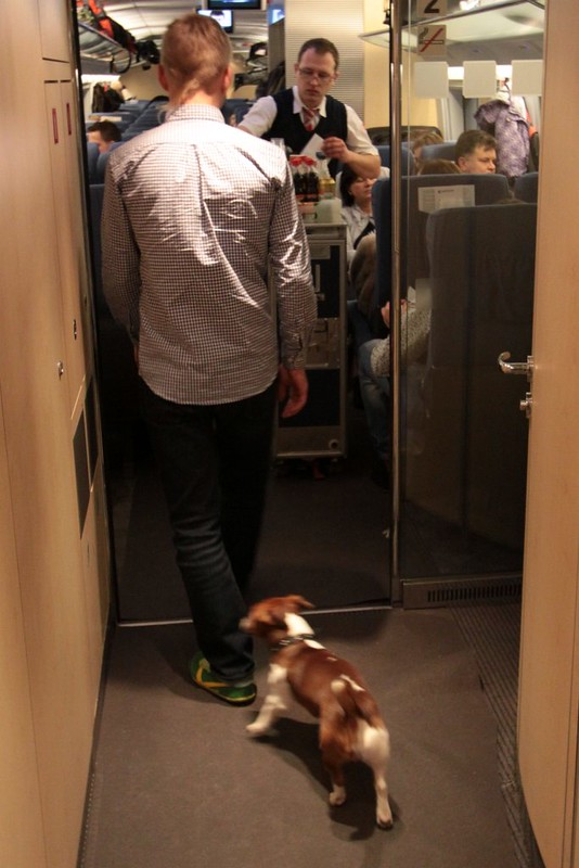 Taking your dog with you on the train?