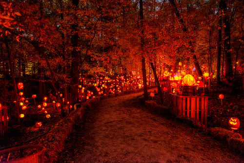 show park november autumn holiday art fall halloween spectacular pumpkin scary october artist unitedstates display jackolantern path kentucky ky awesome pumpkins seasonal illuminated spooky trail event louisville glowing artshow aroundtheworld pumpkinart iroquoispark laughingtree multimediaproduction reckner kosair trigphotography frankcgrace passionforpumpkins holidayartistry louisvillemetroparksfoundation organicgallery