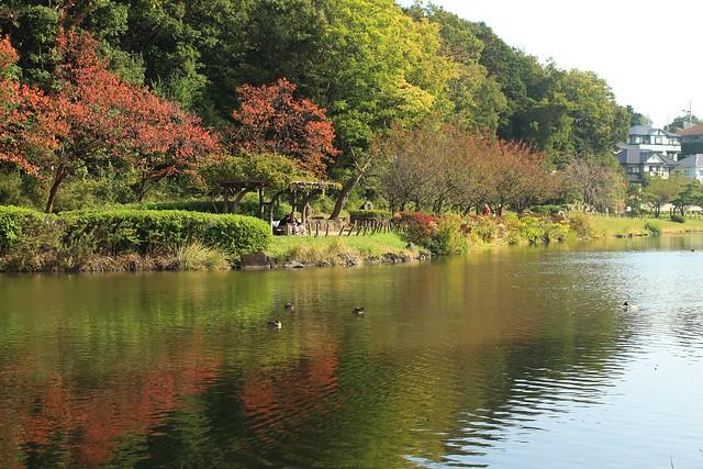 近所の公園で紅葉狩り