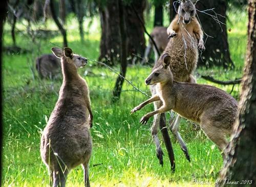 Young Bucks at play