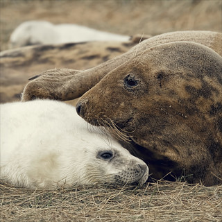 there, there little one (donna nook update)
