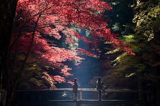 紅葉 - 小國神社