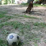 Foreground soccer ball