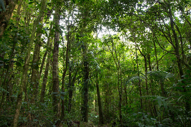 Second growth tropical forest, Caribbean slope