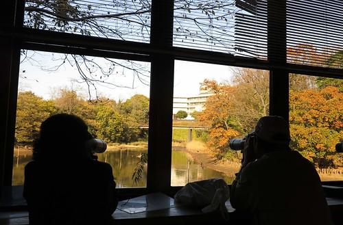 在日本中央博物館的生態園野鳥觀察舍,欣賞秋日。攝影:范欽慧。