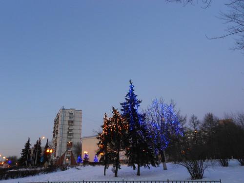синие деревья норм