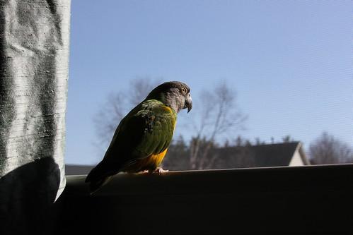 Birds' Arrival 241