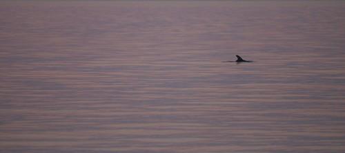 sunrise dolphin marcoisland
