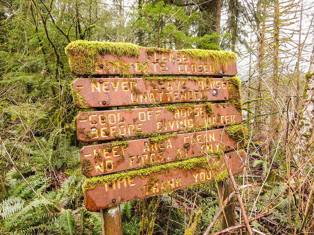 Old mossy sign in bushes