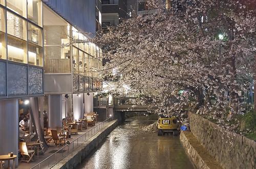 【写真】2014 桜 : 木屋町通/2021-09-17/IMGP5617