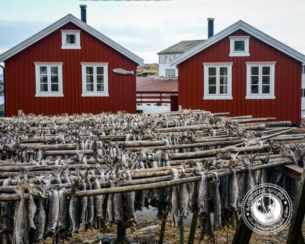 The Lofoten Islands: Paradise Above the Arctic - Hanging Cod Fish