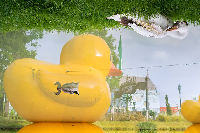 Upside Duck