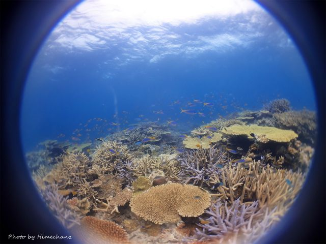 いま石垣島で一番サンゴがキレイだと思うところへ♪
