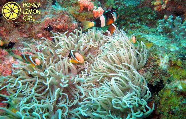 5D4N_Tioman Island_Diving-009