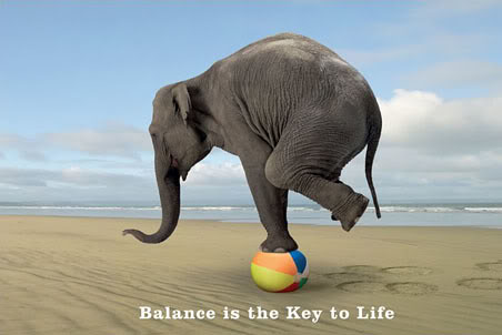lgpp31157balance-is-the-key-to-life-balancing-elephant-poster