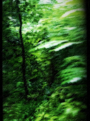 icm intentionalcameramovement samsung mobile android green nature rain trees leaves blur dream dreamy ethereal art artistic philadelphia philly fairmount park photoshop texture rainy blurred motion lucymagoo lucymagooimages fairmountpark