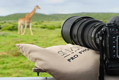 Shamwari Pro Photo Safaris