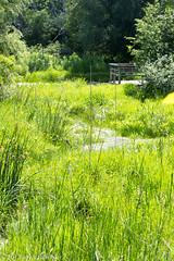 28/52-5: Matthaei Botanical Gardens