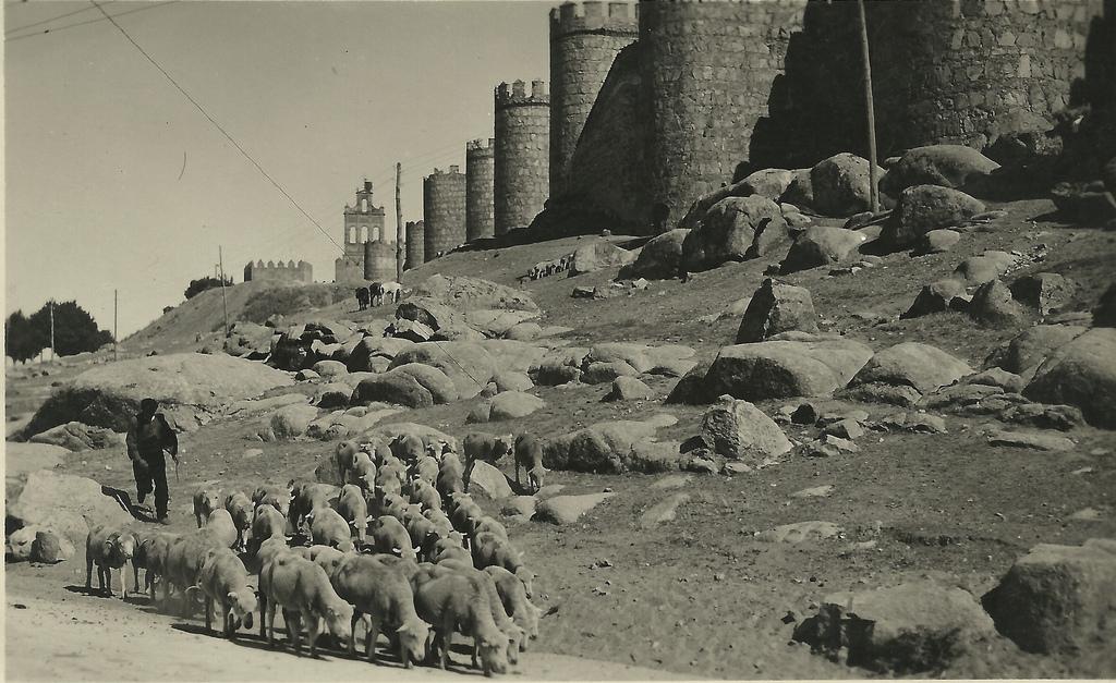 Ganado lanar a su paso por Ávila. 1930. Autor, Avilas.es