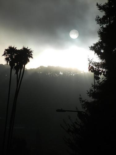 DSCN9203 _ Fog & Sun, Berkeley, CA