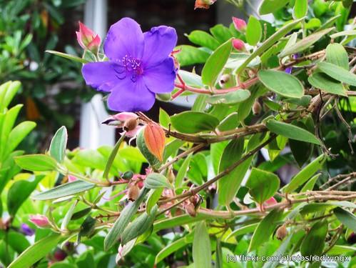 Filbert_flowers5