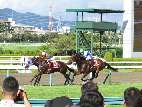 27th The Centaur Stakes / 第27回セントウルステークス - Hanshin Racecourse, Takarazuka