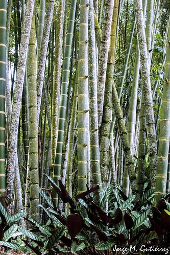 parque naturaleza textura del cafe colombia nacional bambu montenegro guaduas cañasgordas